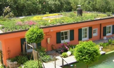 zeleni-krov-extezivni-dom2-domnakvadrat-naslovna