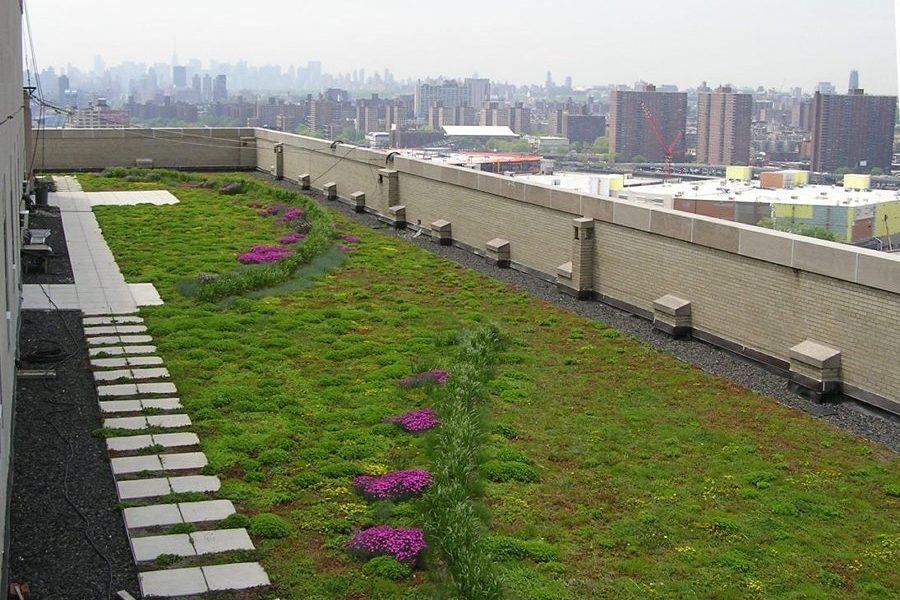 zeleni-krov-extezivni-sukulente-travnjak-dom2-domnakvadrat
