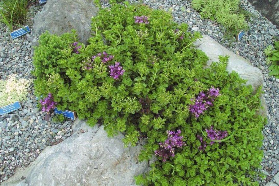 zeleni-krov-extezivni-sukulente-dom2-domnakvadrat