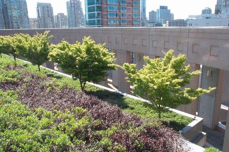 zeleni-krov-intenzivni-zgrada-drvore-dom2-domnakvadrat
