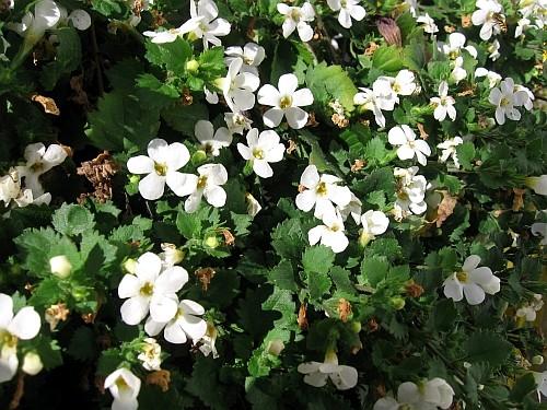 Balkonsko cvijeće Dom2