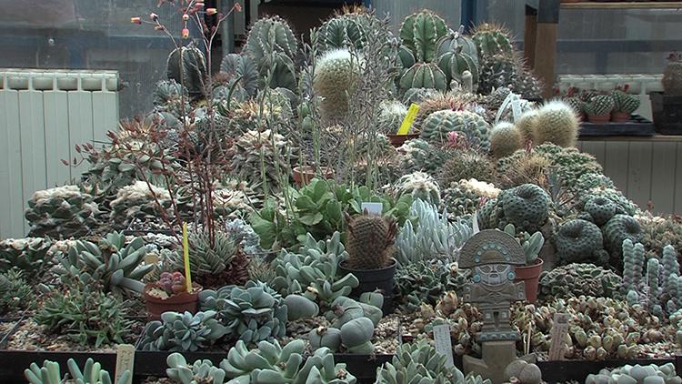 kombinacija kaktusa sukulenata dom2