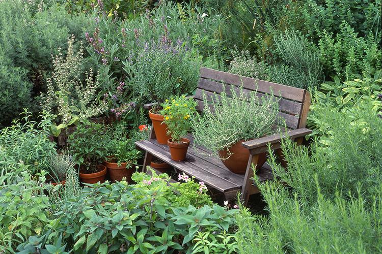 zacinsko bilje mali vrt dom2
