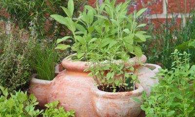 zacinsko-bilje-mali-balkon-dom2