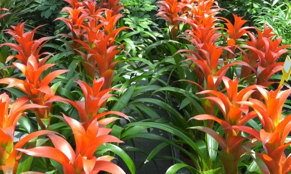 sobno-bilje-koje-prezivljava-ljetne-vrucine-guzmanija-dom2