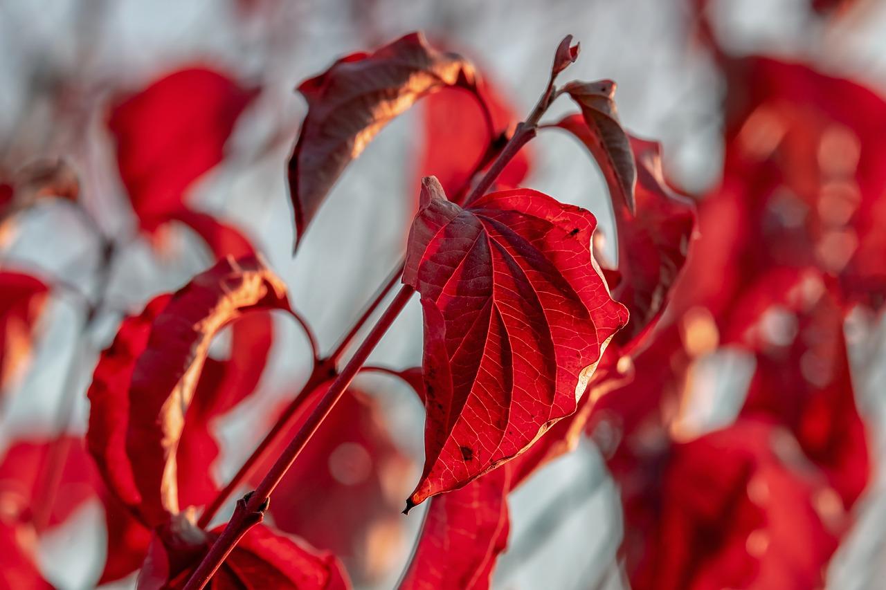 jesen-lisce-aranzman-sasa-sekoranja