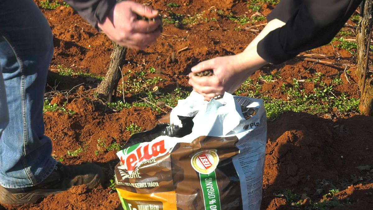 gnojenje-vinove-loze-plantella-organik-za-vinograde-domnakvadrat