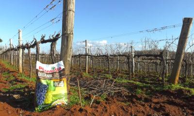 plantella-organik-gnojivo-za-vinograde-domnakvadrat