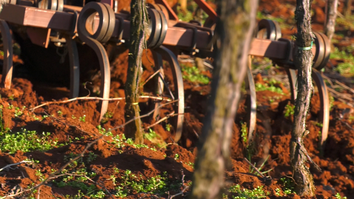 ukopavanje-gnojiva-plantella-organik-za-vinograde-domnakvadrat