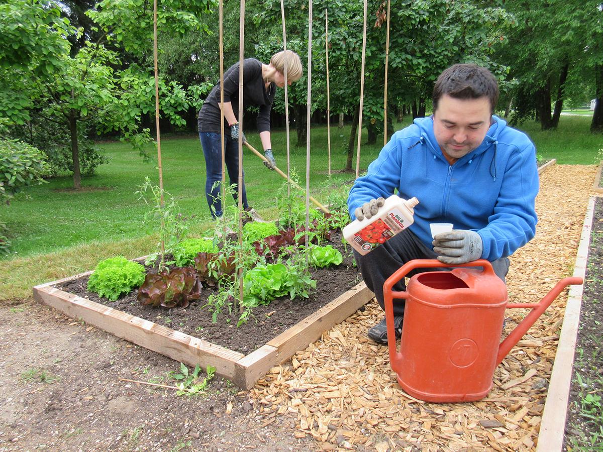 gnojenje-rajcice-organskim-plantella-gnojivom-domnakvadrat