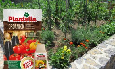 kako-uspjeti-u-uzgoju-domacih-eko-rajcica-plantella-domnakvadrat