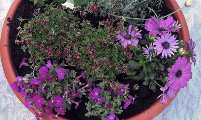 kombinacija-trajnica-cvijece-domnakvadrat