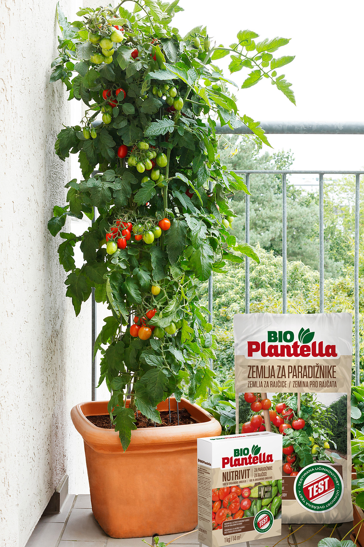 plodovito-povrce-rajcice-u-posudi-sadimo-u-specijalnu-bio-plantella-zemlju-za-rajcice-domnakvadrat