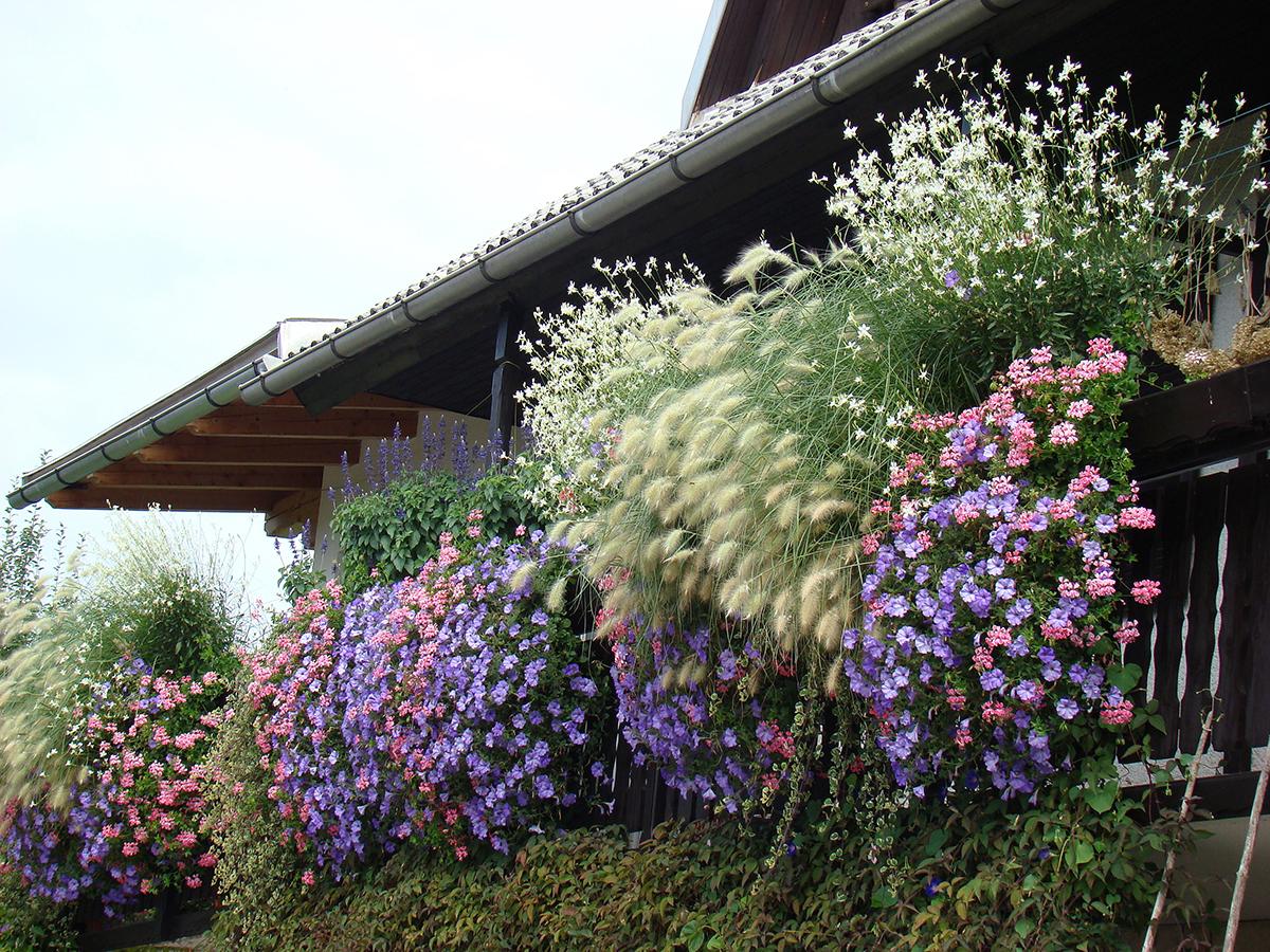 ljubicasti-balkon-u-cvatu-plantella-domnakvadrat