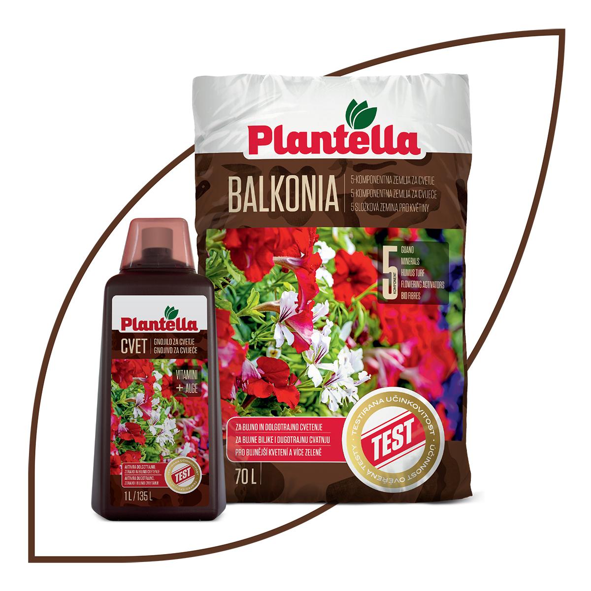 plantella-Balkonia-cvet-domnakvadrat