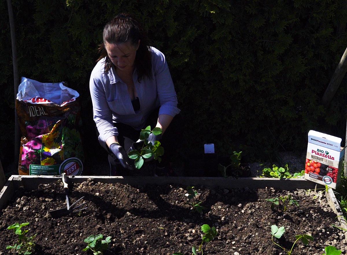sadnja-gredice-ideal-zemlja-plantella-domnakvadrat