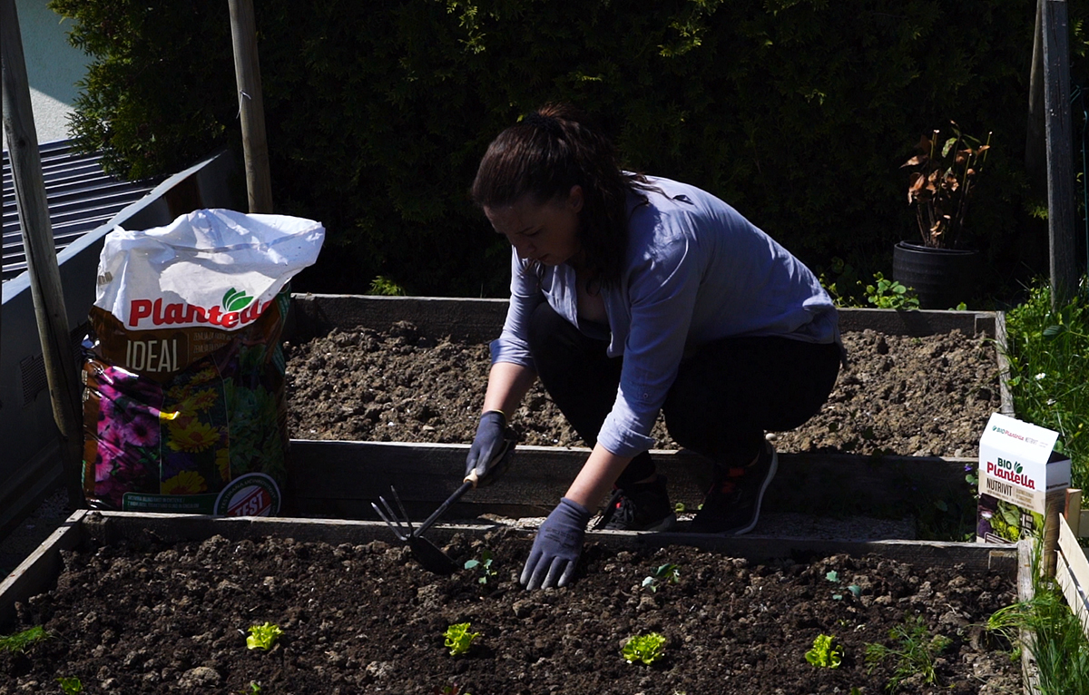 sadnja-gredice-salata-plantella-domnakvadrat