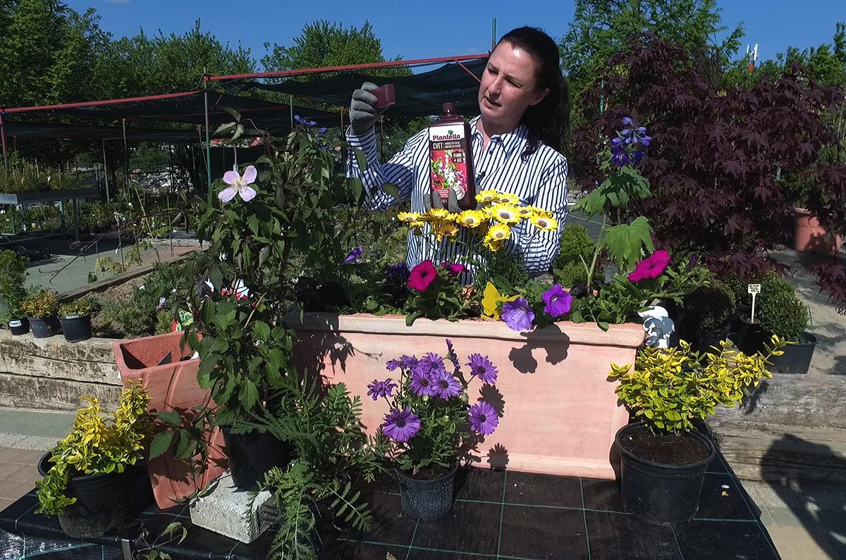 sadnja-ljetnica-za-balkon-plantella-cvet-domnakvadrat