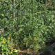 bio-plantella-odrzavanje-bio-vrta-domnakvadrat