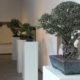 bonsai-expo-medjunarodna-izlozba-domnakavadrat