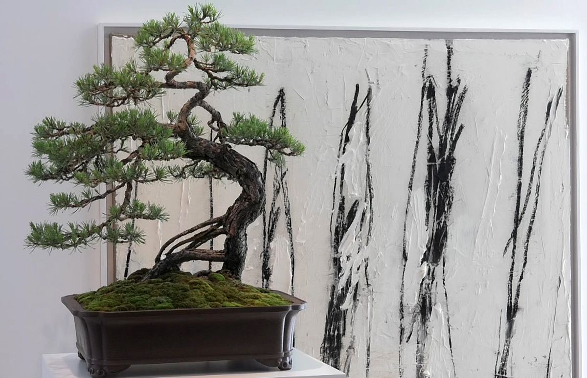 bonsai-izlozba-expo-domnakvadrat