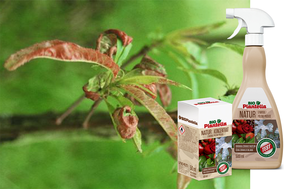 breskova-Kovrcavost-plantella-natur-domnakvadrat