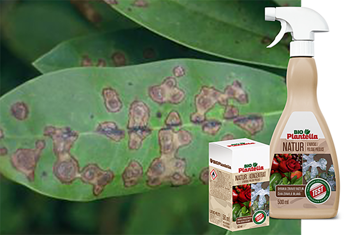 pjegavost-plantella-natur-domnakvadrat