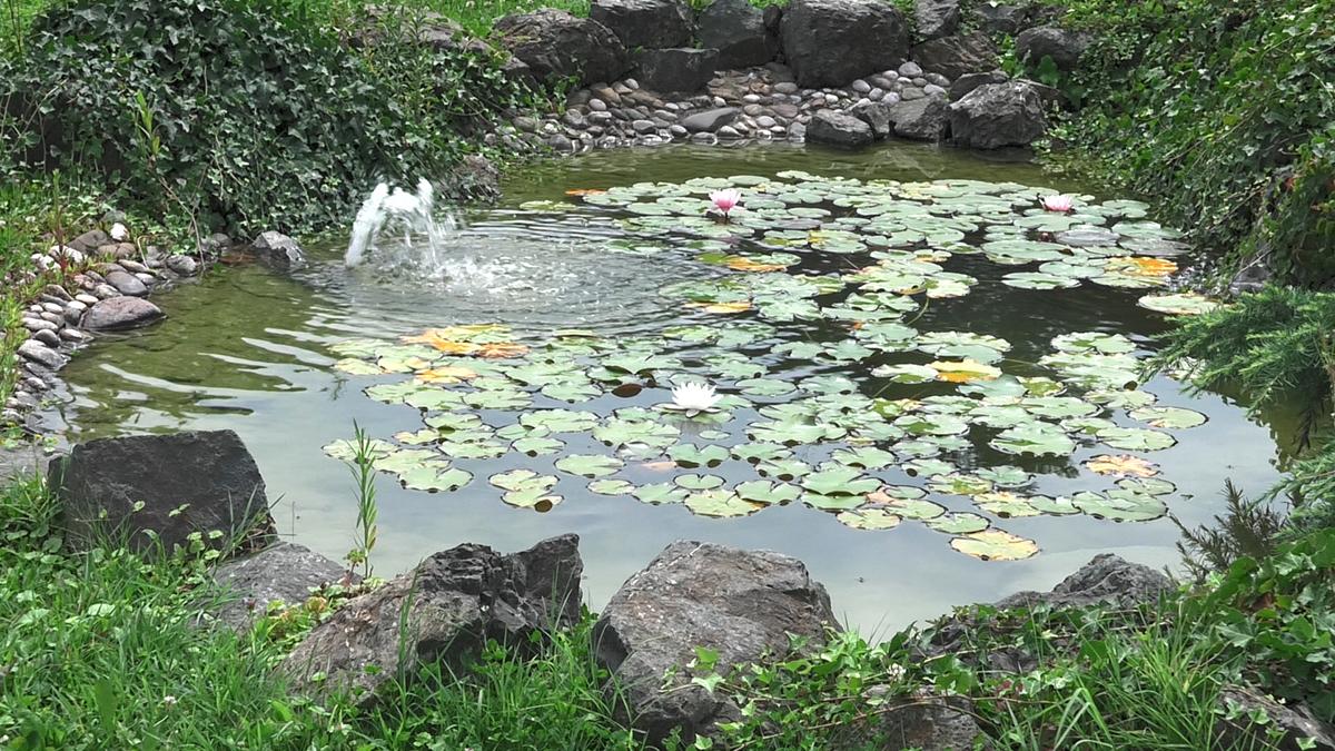neformalni-vodeni-vrt-domnakvadrat