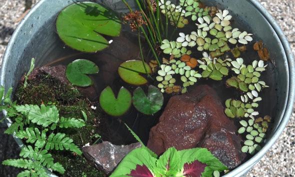 vodeni-vrt-domnakvadrat