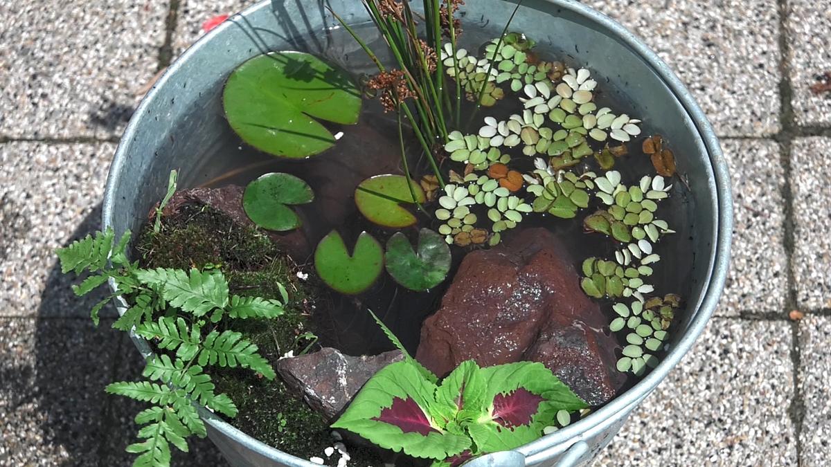 vodeni-vrt-u-kanti-domnakvadrat
