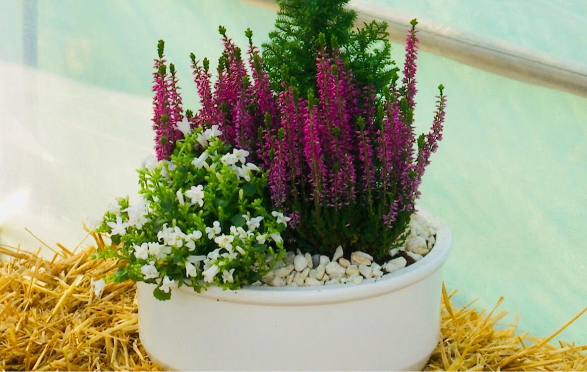 cvjetni-aranzman-grobovi-svisveti-domnakvadrat