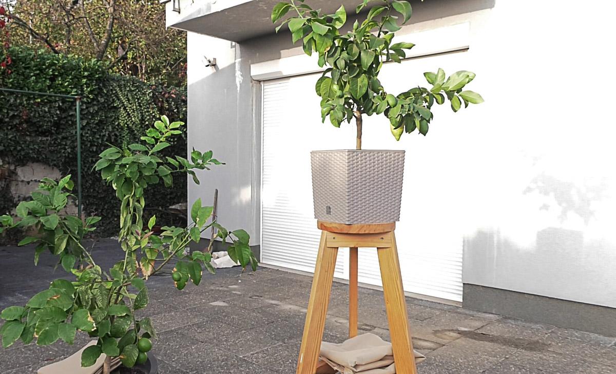 vrt-biljke-zastita-citrusi-zemlja-jesen-domnakvadrat