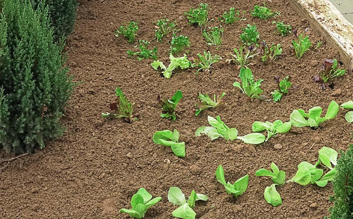 vrt-biljke-zastita-zemlja-jesen-domnakvadrat