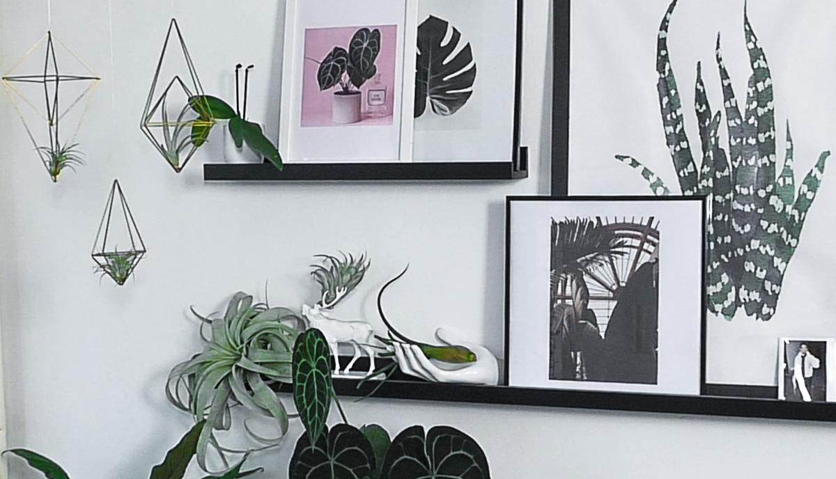 biljke-slike-domnakvadrat
