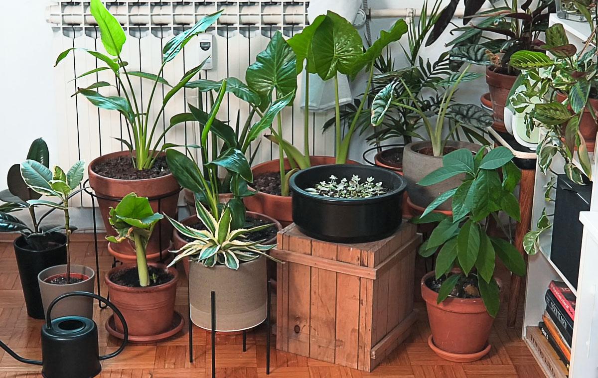 dnevna-doza-biljaka-biljke-soba-domnakvadrat
