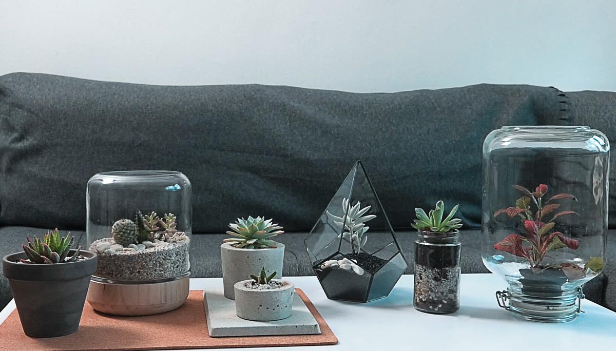 dnevna-doza-biljaka-dnevni-boravak-domnakvadrat
