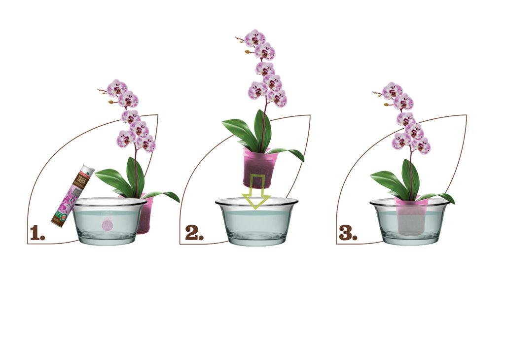 potapanje i gnojidba-orhideja-plantella-domnakvadrat