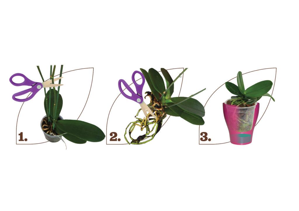 presadnja-orhideja-plantella-domnakvadrat