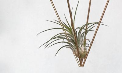 racne-biljke-dnevna-doza-biljaka-domnakvadrat