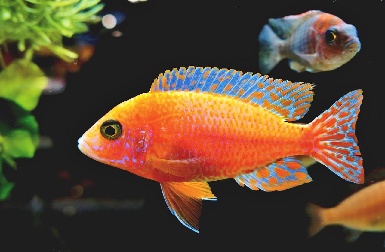 riba-ribica-akvarij-domnakvadrat