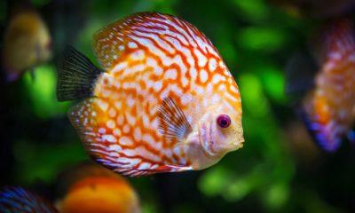 ribica-riba-akvarij-domnakvadrat