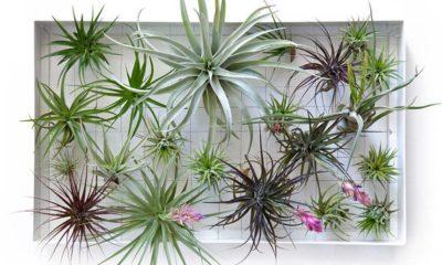 zračne-biljke-domnakvadrat