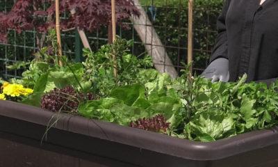 njega-i-zastita-malog-vrta-plantella-domnakvadrat