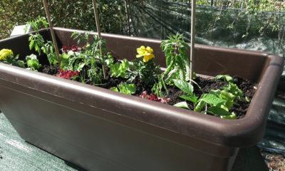 plantella-sadnja-malog-vrta-domnakvadrat