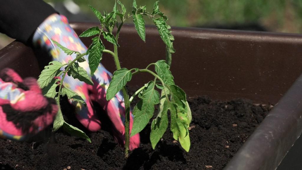 plantella-sadnja-malog-vrta-rajcica-domnakvadrat