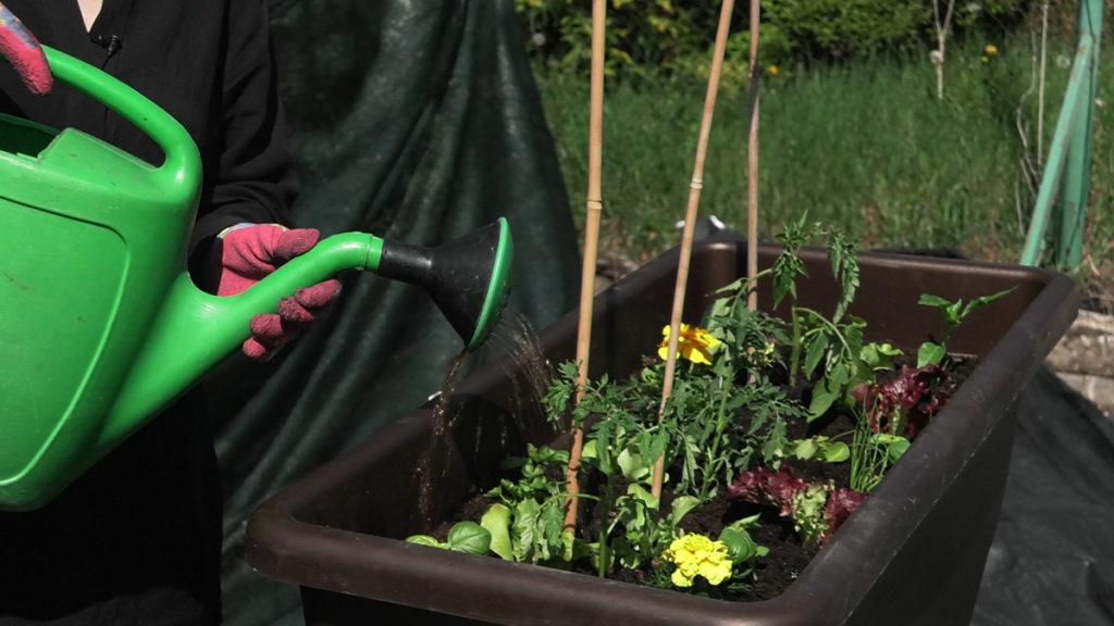 plantella-sadnja-malog-vrta-zalijevanje-domnakvadrat