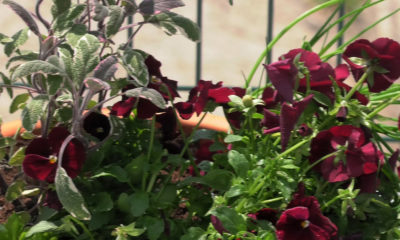 kombinirani-zacinski-vrt-domnakvadrat