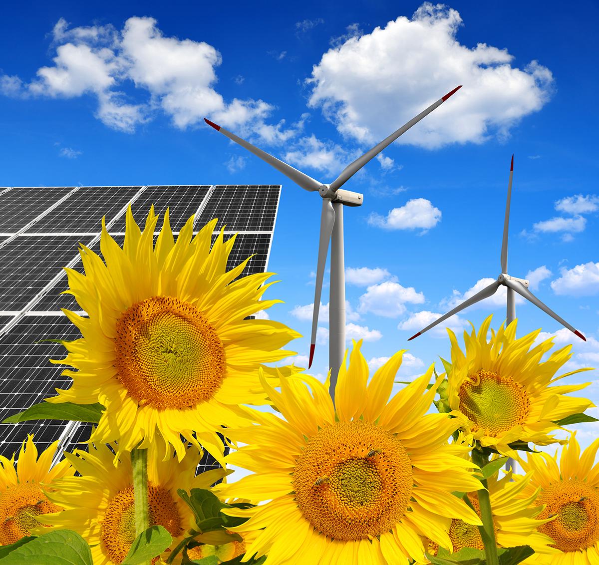 zeleno-gospodarstvo-domnakvadrat