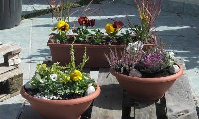 jesenska-kombinacija-biljaka-za-balkone-domnakvadrat-vrtni-centar-sestine