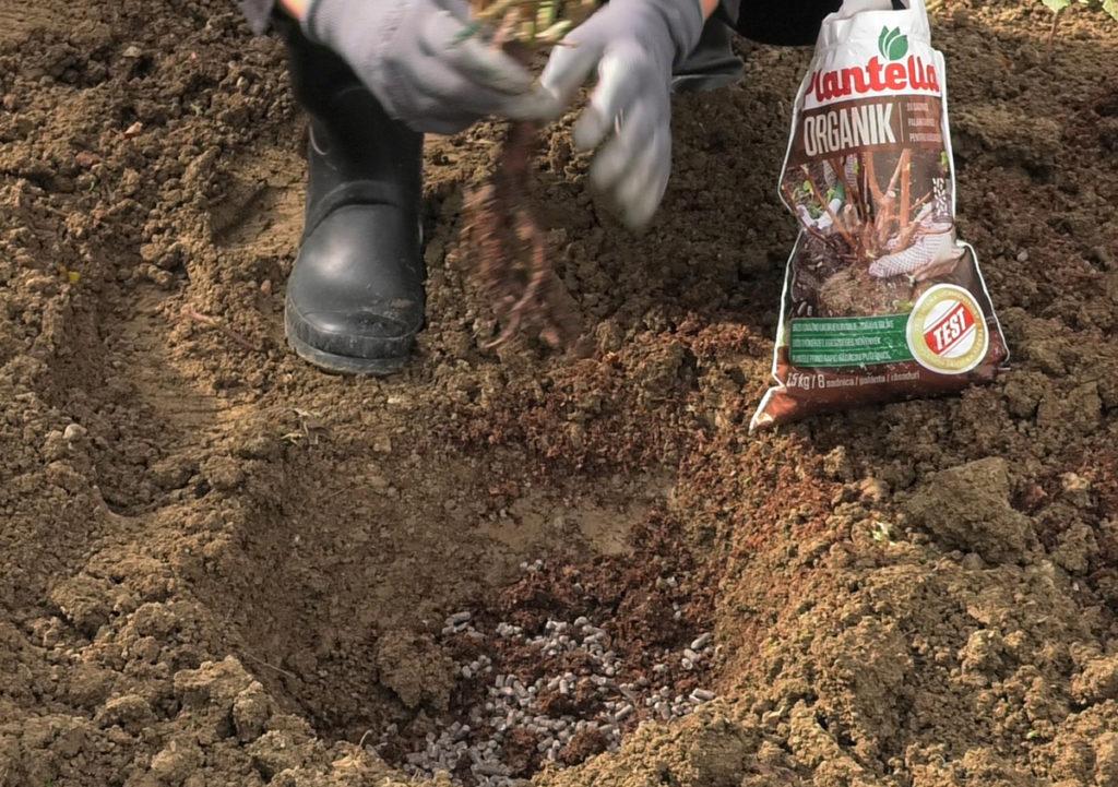 sadnja-ruze-plantella-organik-domnakvadrat